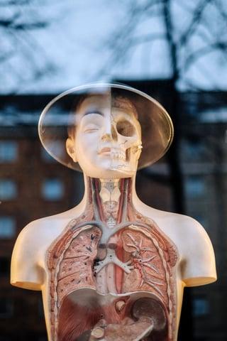 Uncovering Kidney Disease - Glomerulonephritis